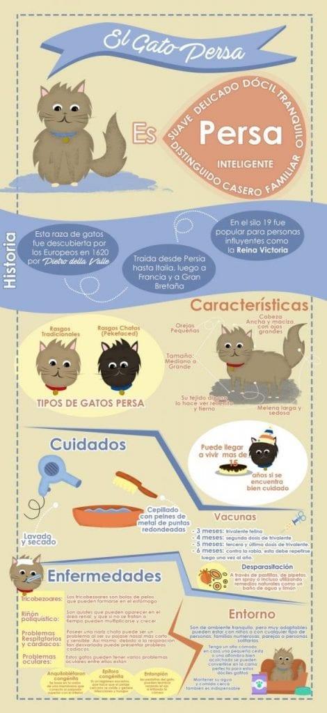 gato persa infografia