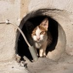como adoptar un gato en España