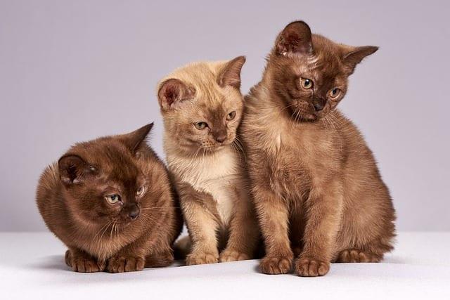 gatos relindos