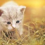 los gatos mas lindos